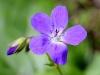 fiori-valle-aosta-02