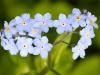 fiori-valle-aosta-08