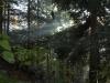 passeggiate-boschi-champoluc